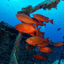 red fish diving mauritius